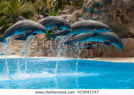 dolphin jump - stock photo
