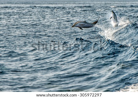 dolphin jumping outside the sea - stock photo