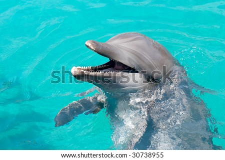 Dolphin laughing at the crowd - stock photo