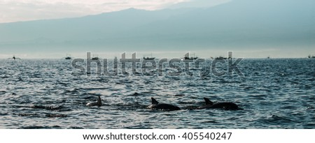 Dolphin playing in the haze sea water - background fishing boats under mountain  - Morning in Bali Indonesia - stock photo