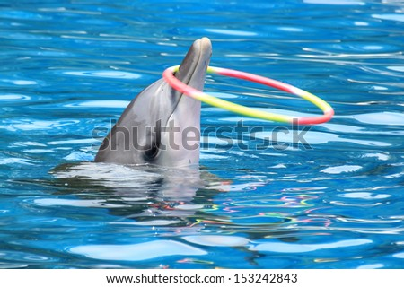 Dolphin show in the water park at bangkok, thailand - stock photo