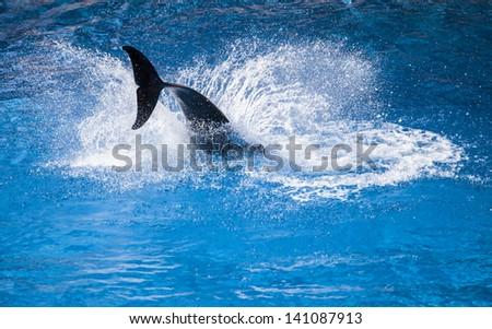 Dolphin Splash - stock photo