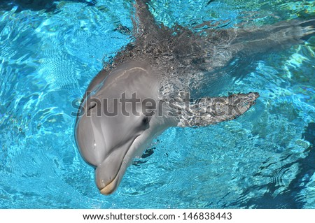 Dolphin swimming in water looking at camera - stock photo