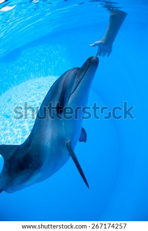 Dolphin swims under the water - stock photo