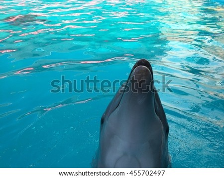 dolphins - stock photo