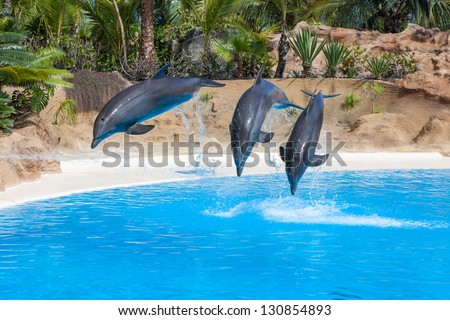 Dolphins doing a show in the swimming pool of amusement park - stock photo