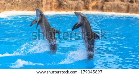 Dolphins performing a tail stand in a pool in a park show. - stock photo