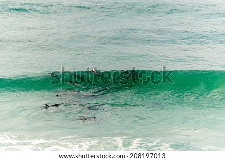 Dolphins riding the waves - stock photo