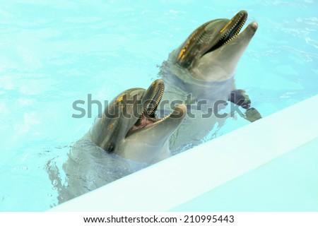 Dolphins smile. Show in aquarium - stock photo