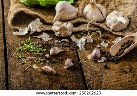 Domestic bio garlic - Czech, spices and fresh microgreens plants - stock photo