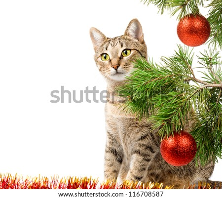 Domestic cat and Christmas tree on white - stock photo