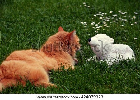 Domestic cat and teddy bear - stock photo