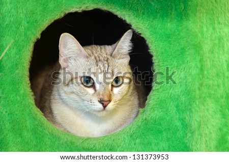 domestic cat in green hole box - stock photo