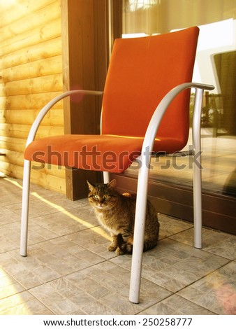 Domestic cat is hiding in shadow under a chair in the sunny summer day - stock photo