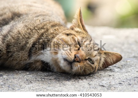 Domestic cat napping with blinking eye - stock photo