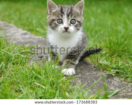 domestic cat outside in the field - stock photo