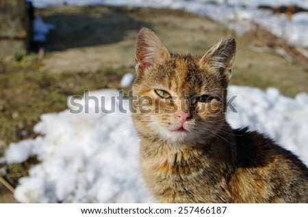 Domestic cat photographed in a winter day - stock photo