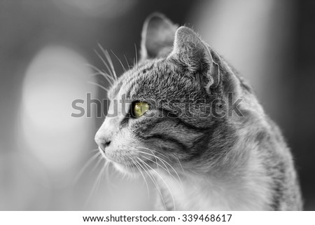 Domestic Cat Portrait - stock photo