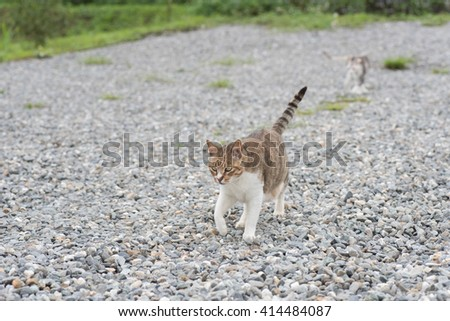 domestic cat walk in the outside - stock photo