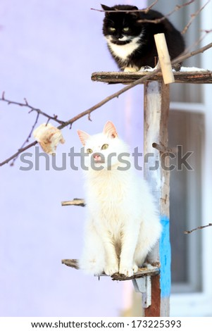 Domestic cats and kittens in different situations. - stock photo