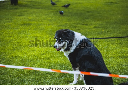 Domestic Dog inside national park with rope around neck - stock photo
