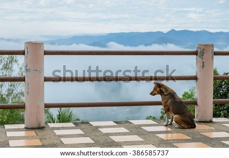 Domestic dog sitting at the mountain view point  with sea of fog  , Thailand - stock photo