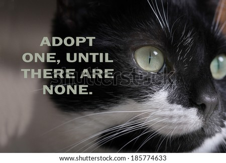 DOMESTIC STRAY CAT ADOPTION POSTER.  Can be used for animal charity and shelter to help find lost and stray cats new homes. - stock photo