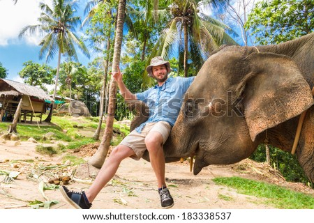 Domesticated elephant lifting a tourist with his trunk. - stock photo