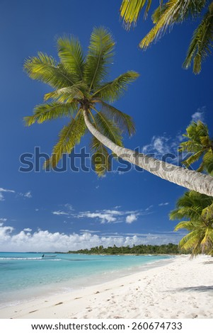 DOMINICAN REPUBLIC, SAONA ISLAND, PALM TREES ON BEACH - stock photo