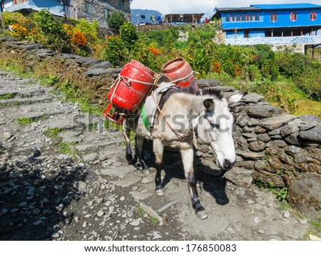 Donkey carrying two gas cylinders in Nepal - stock photo