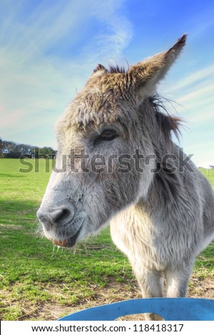 Donkey eating a carrot in the field - stock photo