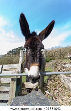 Donkey in a field looking over a gate - stock photo