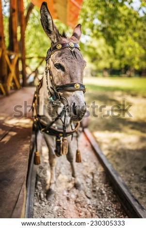 Donkey in harness carries wooden sleepers trailer with children. - stock photo