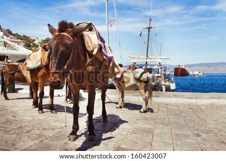 donkey in Hydra, Greece - stock photo