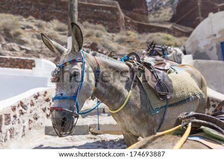 donkey in Santorini island,Greece  - stock photo