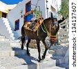 donkey on stairs of Santorini, traditional Greek life series - stock photo