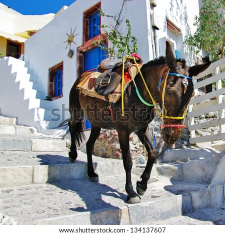 donkey on stairs of Santorini, traditional Greek life series - stock photo