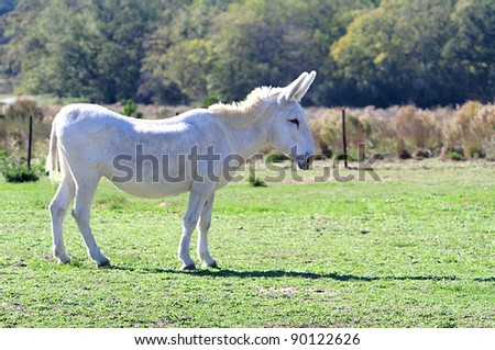 Donkey standing still in a field - stock photo