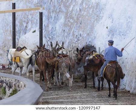 donkeys at the port of Fira in Santorini, Greece - stock photo