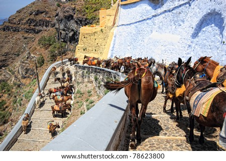 donkeys from Santorini Greece on the way to the old port of Fira - stock photo