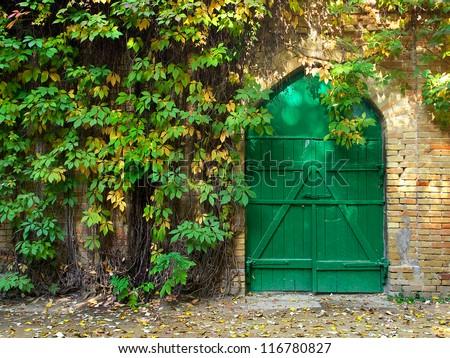 Door and bright green ivy in garden. Natural composition - stock photo