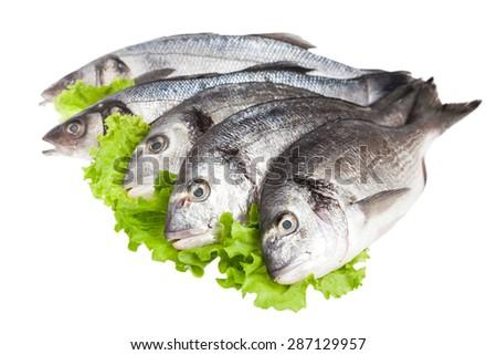 Dorado and seabass fish isolated on white background - stock photo