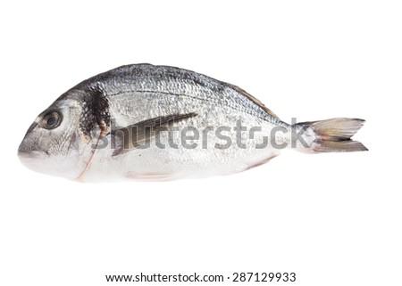 Dorado fish isolated on white background - stock photo