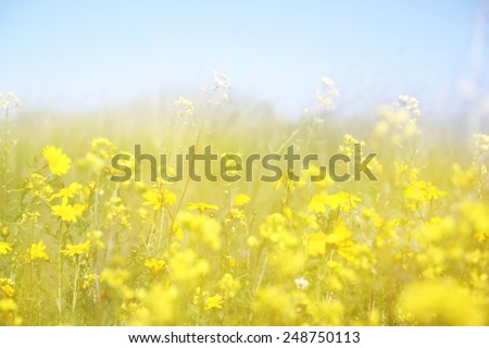 double exposure of flower field bloom, creating abstract and dreamy photo - stock photo