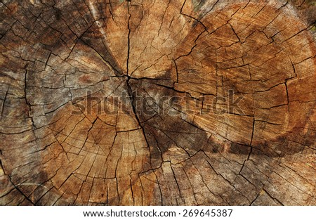 Double exposure of Timber Logs and Cut tree trunk. nature background - stock photo
