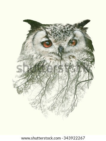 Double Exposure Portrait of Owl and Tree Branch - stock photo