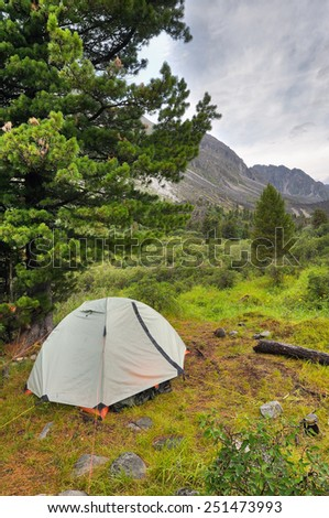 Double lightweight sports tent under a large Siberian pine in a mountain valley - stock photo