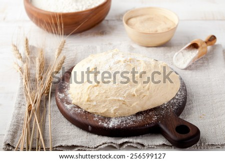 Dough, yeast-fermented dough, pizza,bread, pie dough with flour and wheat spikes on a white wooden background - stock photo