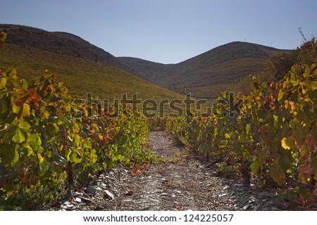 Douro Vineyard, Portugal, Europe - stock photo