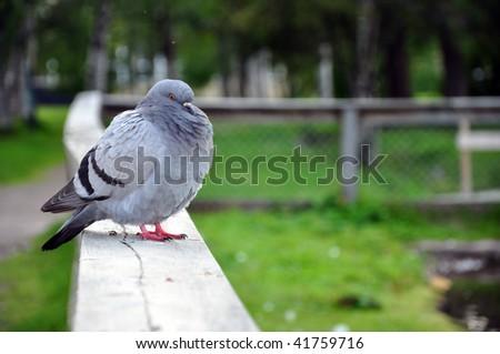 dove - stock photo
